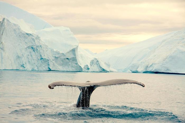 J'♥ les secondes éternelles. Au Groenland. D'un coup, elle jaillit. A 1 m du zodiac. Son souffle rafraichit nos joues... Puis elle sonde. Silence ébloui sur le bateau.