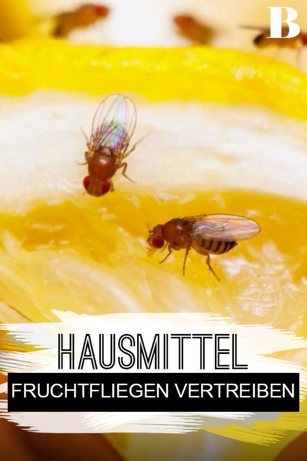 Fruchtfliegen Dieses Hausmittel Vertreibt Sie Aus Deiner Kuche Fruchtfliegen Sind Lastig Sie Kommen Aus De Fruchtfliegen Hausmittel Fruchtfliegen Vertreiben