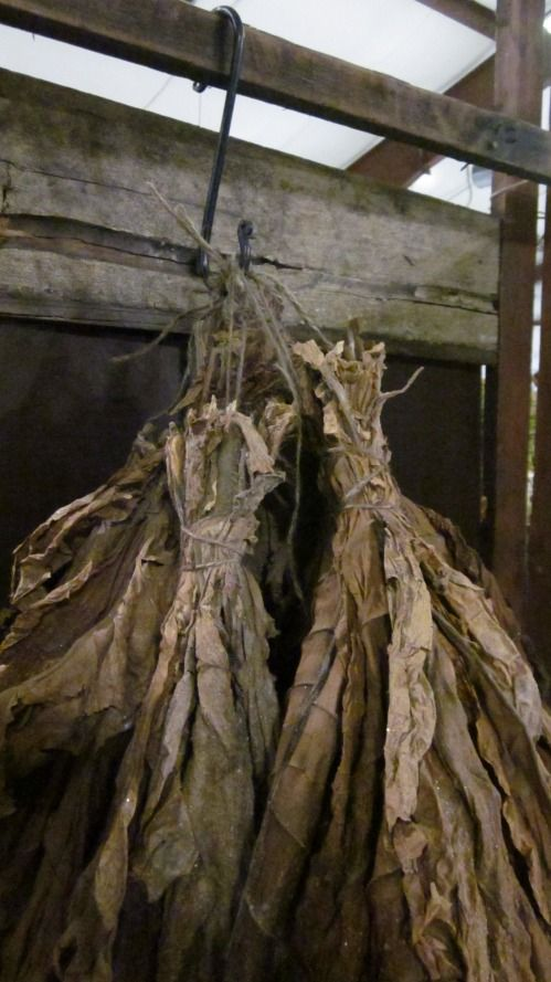 Tobacco hung for drying.  My grandparents used to be tobacco farmers in the Appalachian Mountains.