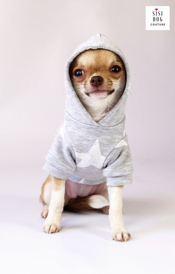 Chihuahua Clothes Chihuahuas Dog Clothes Teacup Dog Clothes Etsy Chihuahua Dogs Clothes Chihuahua Clothes Teacup Dog Clothes