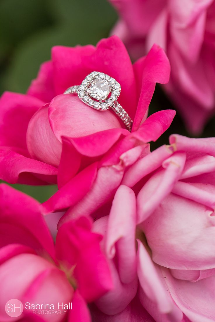 69 best Ring Shots images on Pinterest