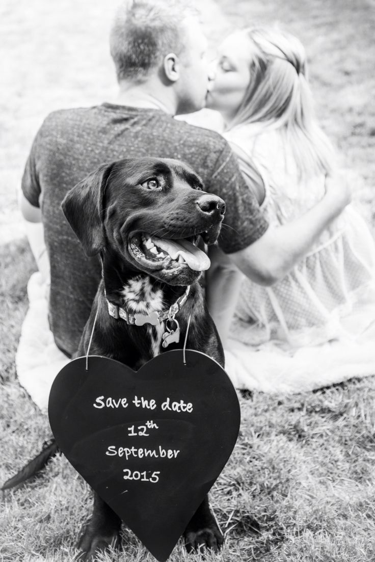 Save the date card with dog