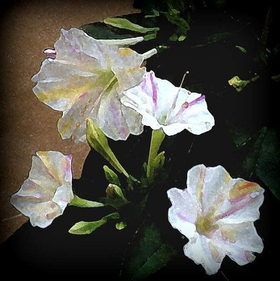 Spanish Flowers Mirabilis Blossom  Print by BloominLuvly on Etsy, $7.95