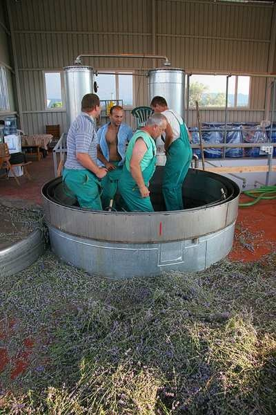 Lavender distillation in Bulgaria 2009, IS THIS WHY LAVENDER SMELLS SO GOOD, TOE JAM ??????