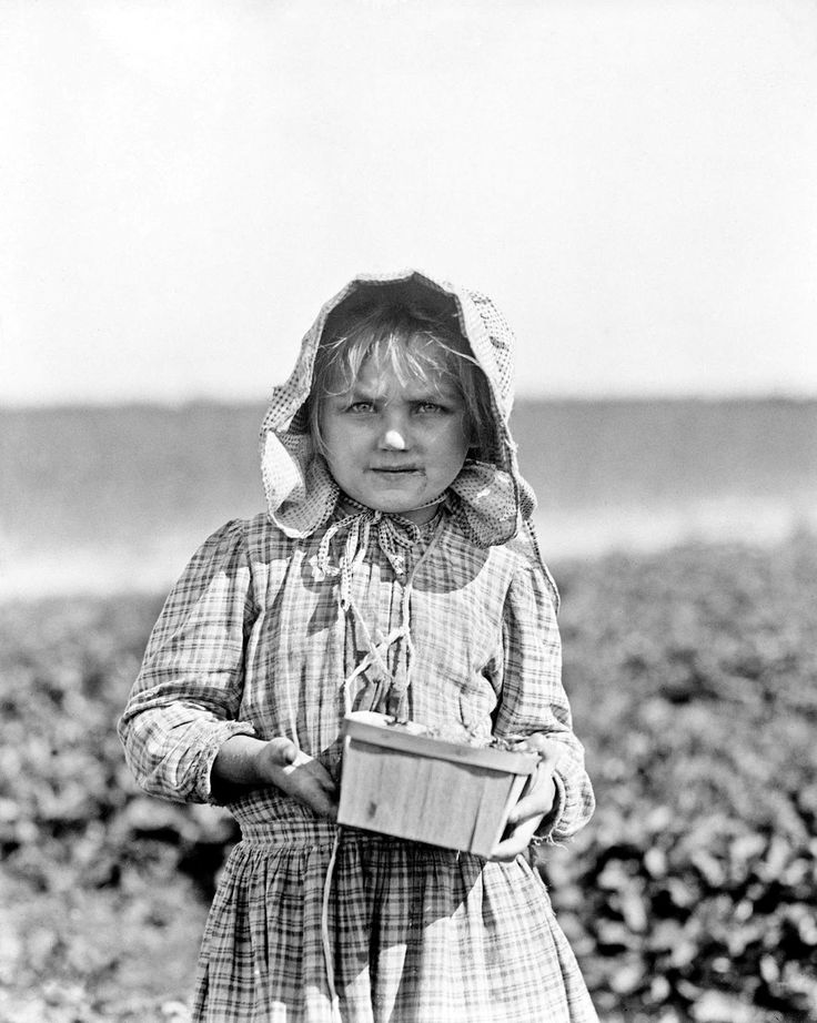 Alberta McNadd on Chester Truitt's farm at Cannon, Delaware. Alberta is 5 years of age  and has been picking berries since she was 3. 1910  Lewis Hine