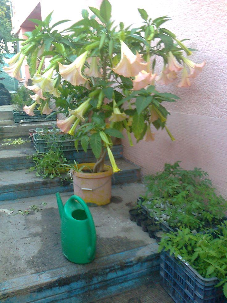 ''A világ élni akar és virágba borulni!,,