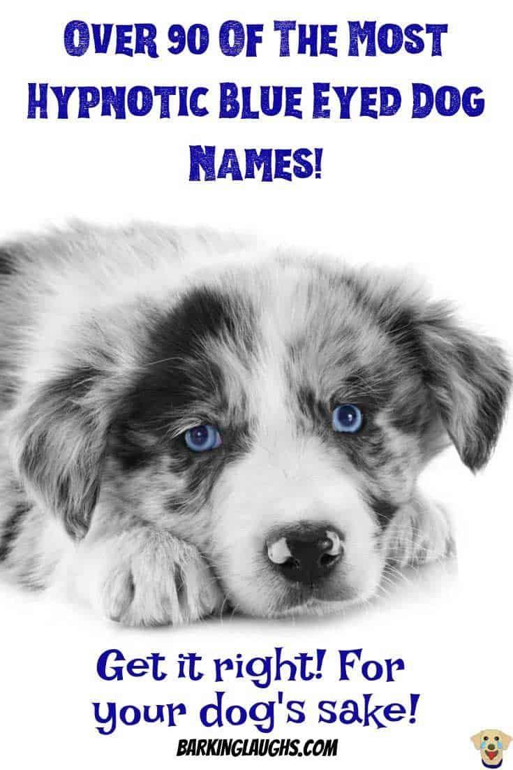 Over 90 Of The Most Hypnotic Blue Eyed Dog Names Blue Eyed Dog
