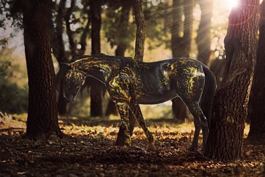 Artworks by WhackToTheFuture            Collection of Stunning Horse Manipulations