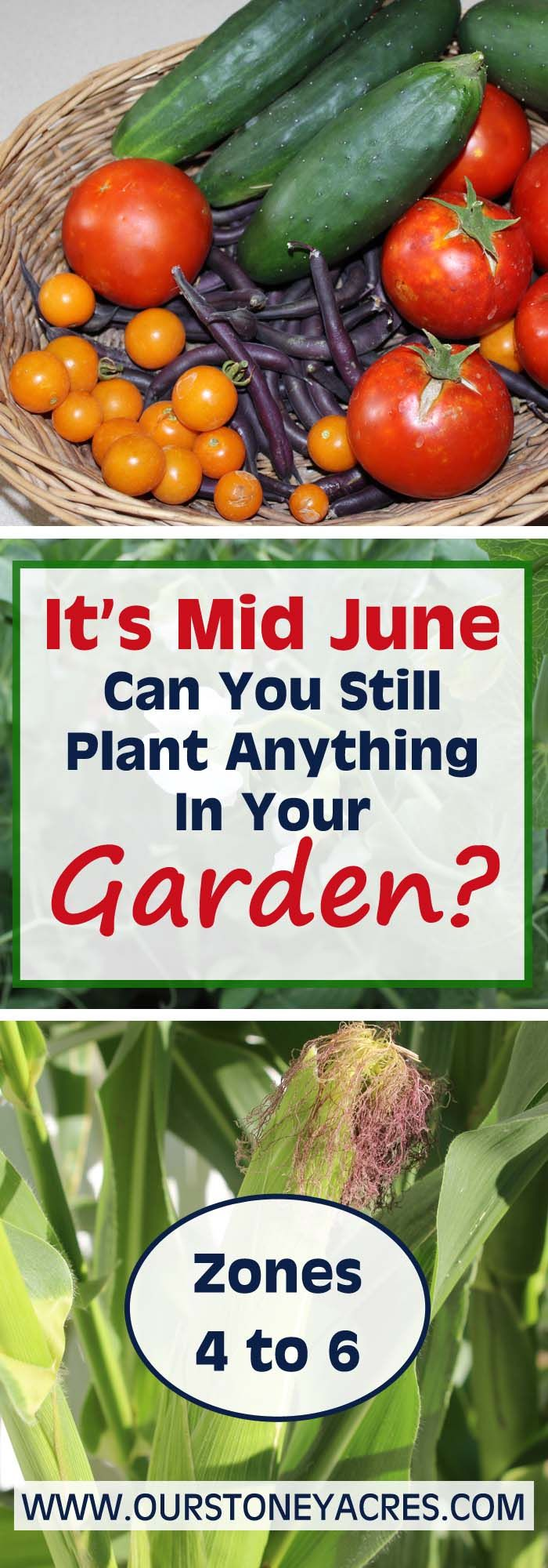It's the middle of June and you haven't planted your garden yet. What is there that you can still plant and get a harvest before the frost comes in the fall?