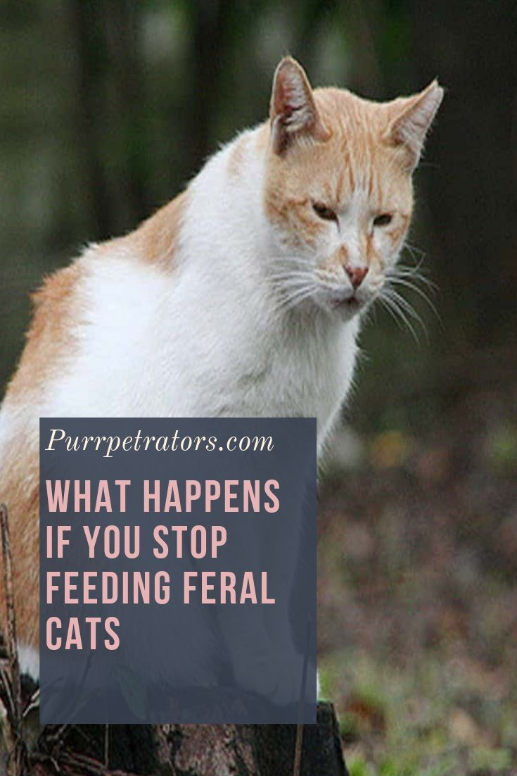 For Many People Seeing A Cat Outside Might Be A Nice Little Addition But The Problem Is Feeding It Can Be A Problem Lots Of Ti Feral Cats Cats Outside Cats