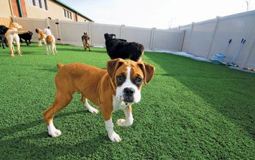 A good article on doggy daycare.