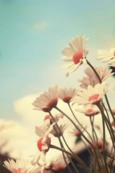 daisies!!!  Haven't seen a daisy with a pink center.  so delicate