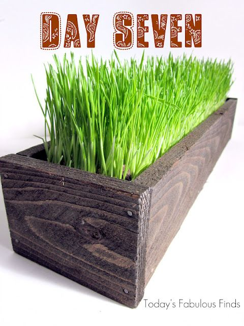 I want to grow some wheat grass to have around my home - love the vibrant color for green.  This website shows how she did it.