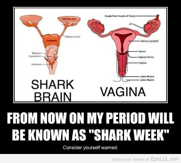 Shark Brain Vs. Human Vagina..