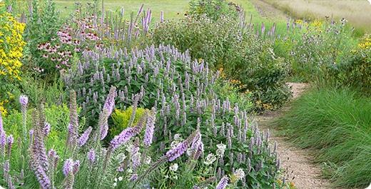116 best gardening wisconsin native plants images on pinterest