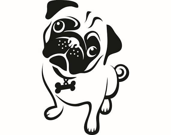 best 25  teacup puppy breeds ideas on pinterest