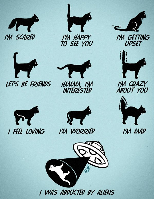 Cat Tail Movements