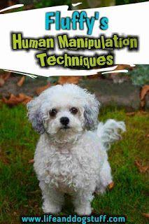 Menschen zu manipulieren ist eine natürliche Fähigkeit, die die meisten Hunde haben. Mein Hund Fluffy teilt …   – Cute cats