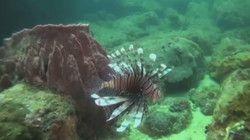 Leven op een koraalrif