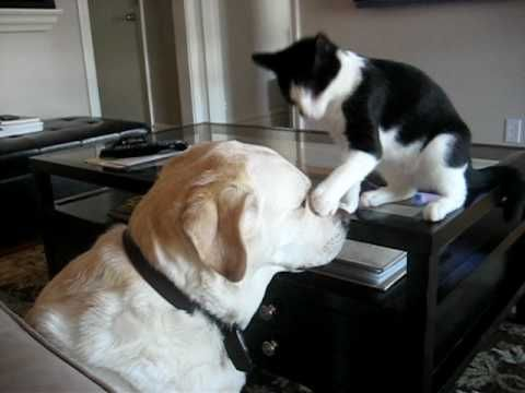 Cat and Dog Play Fighting :-) Cat pesters the dog until the dog can't stand it anymore. ♥