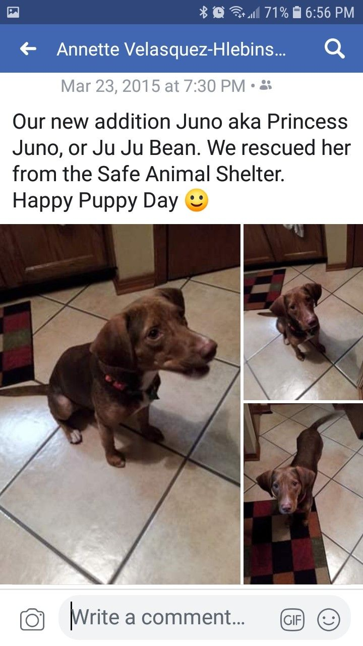 Pin By Annette Velasquez Hlebinsky On Juno Zoey Puppy Day Happy Puppy Animal Shelter
