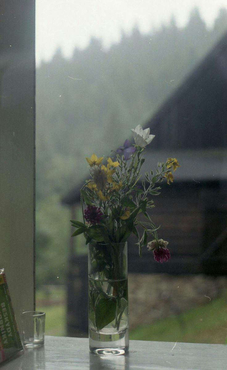 Flowers babe #ricoh #ricoh500me #analogfeatures #analoguephotography #filmisnotdead #analog #35mm #fotografiaanalogowa #klisza