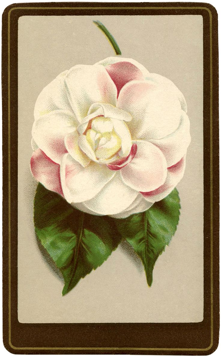 Camellia Flower Image   The Graphics Fairy is one of my favourite sites. Free graphics that can be used in so many different ways!