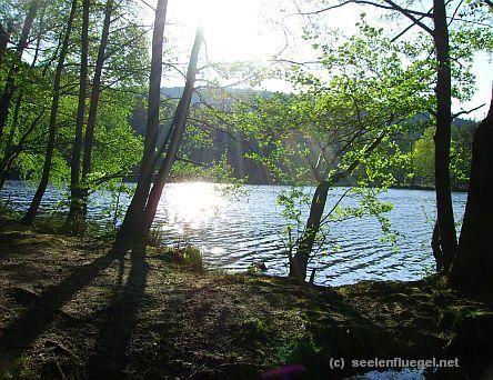 SEELENFLÜGEL - Bilder vom Pfälzerwald