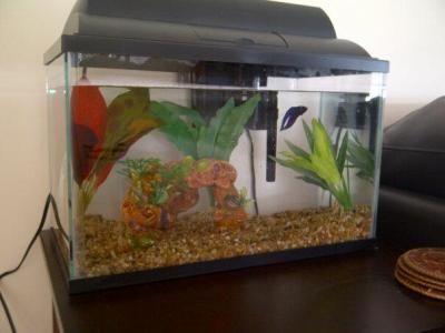 Top Fin 174 5 5 Gallon Aquarium Starter Kit Sale Fish