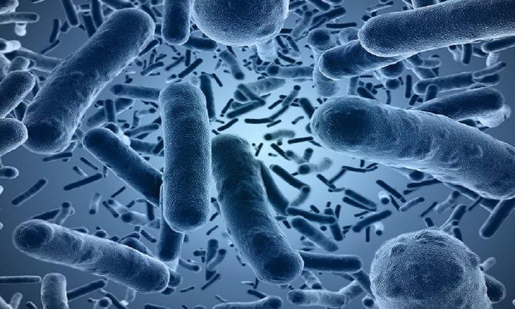 Probiotic Bacteria: Streptococcus Thermophilus