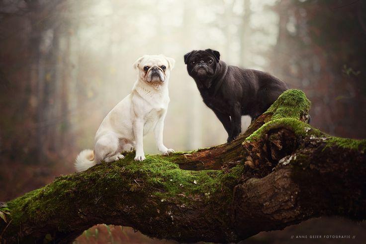 - Ziemlich beste Freunde - - https://www.facebook.com/annegeierfotografie/
