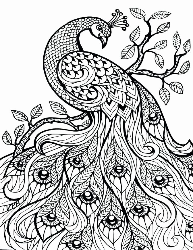 Printable Desert Animal Coloring Pages in 2020 | Peacock ...