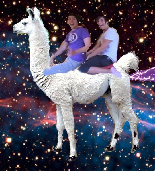 Dan and Phil on a llama in space. Okay then, internet ...