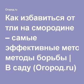 Как избавиться от тли на смородине – самые эффективные методы борьбы | В саду (Огород.ru)