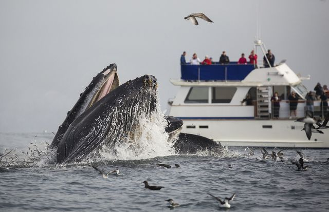 Guide to whale watching in California includes when and where to go, what to bring with you, and what you will see.