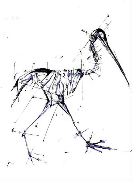 24 best Bird Skeletons images on Pinterest | Skulls, Skeletons and Bird