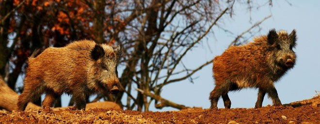 Wildlife in the National Park in the forest of Dadia near #Kipoi #Greece