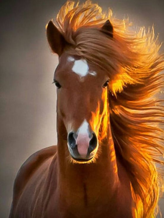 This is a beautiful horse! OMG!  Amazing...❤️