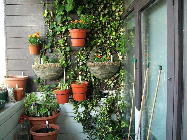 Patio Balcony Plants On Trellis