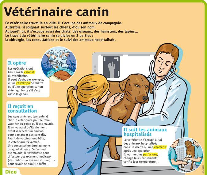 Fiche exposés : Vétérinaire canin