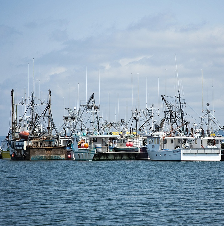 123 Best Digby, Nova Scotia Images On Pinterest