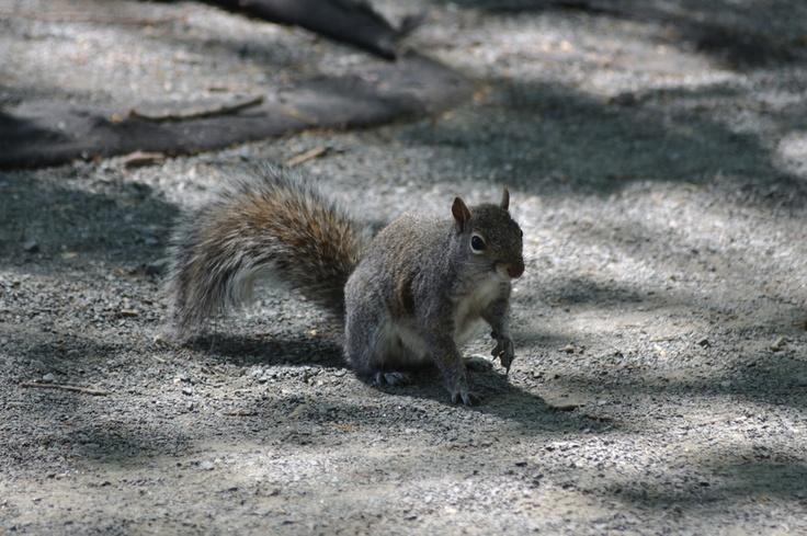 A newyorker squirrel