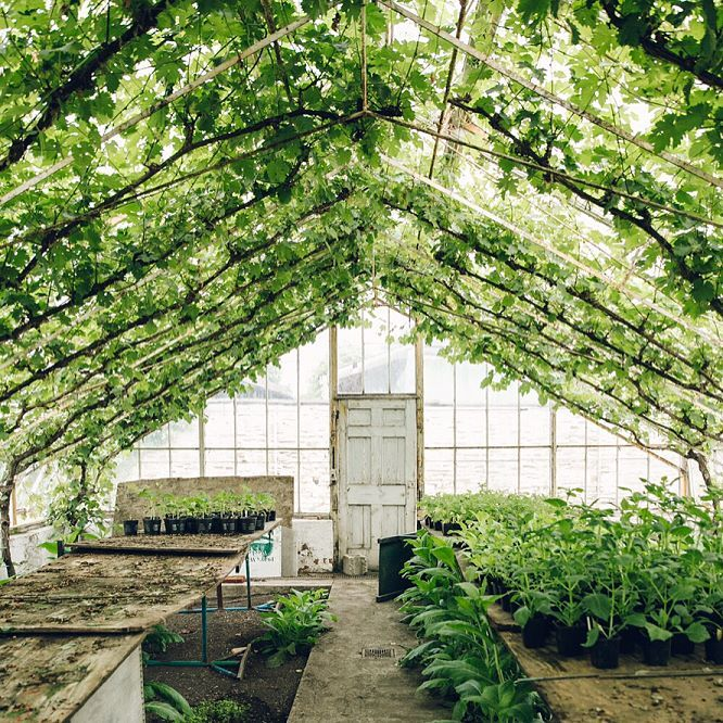 UPDATE: a new post on our website this morning and a stealth visit to this green wonderland.  (link in profile) #HaarkonGreenhouseTour