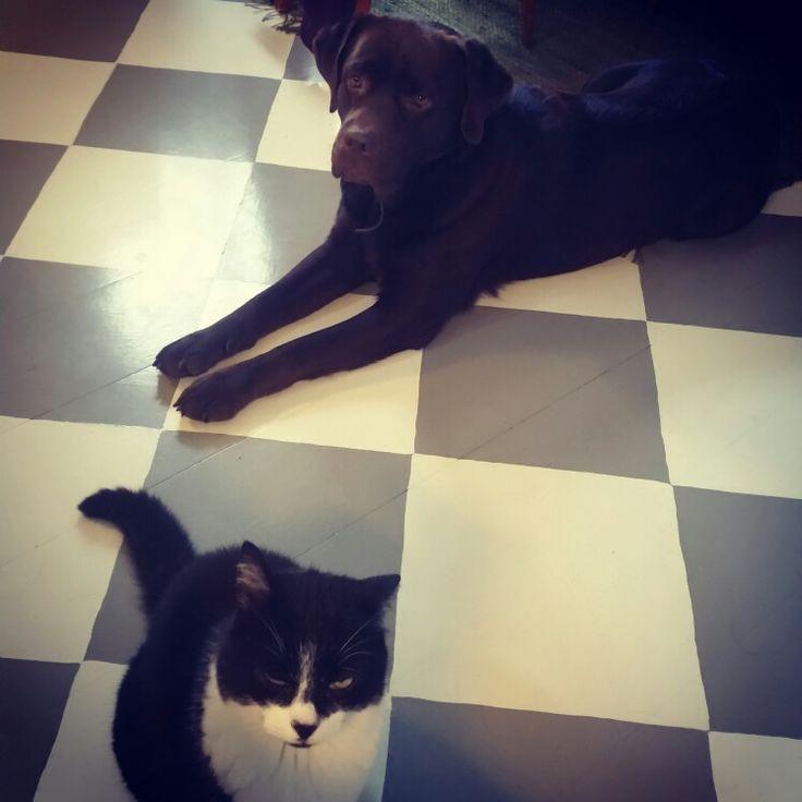 Katten o hunden