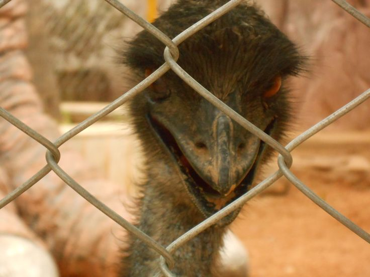 This picture of an emu was sent by CJ Ankita from Bangalore. She took this picture while on a visit to Innovative Film City in the city suburbs. She says, 'The expression of this creature had so much to say. He was amused seeing so many people around or had the witty thought in mind to chase all of us.'