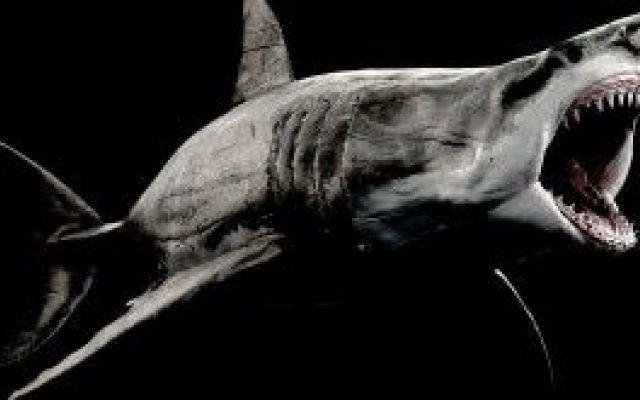 Il grande squalo bianco e l'inquinamento in Sudafrica Carcharodon carcharias chiamato anche grande squalo bianco, carcarodonte o talvolta semplicemente pescecane, è un pesce condroitto della famiglia dei Lamnidi. Unico rappresentante vivente del genere