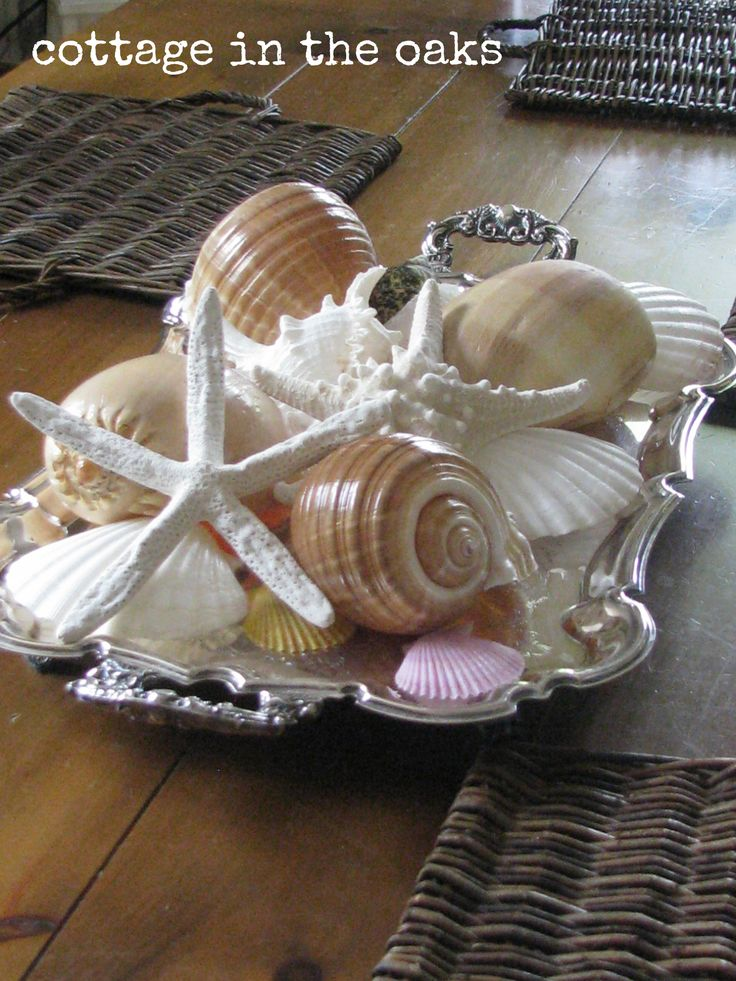 Decorating with seashells - not sure why all my shells are in grocery bags and trays are stored in a cupboard