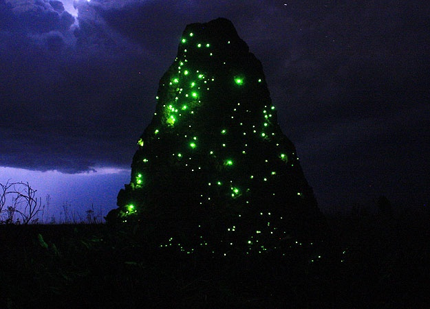 This is a giant termite mound in the grasslands of Brazil.  The glowing green lights are actually beetle larvae.  When they glow, the flying termites are attracted to them and go in for a closer look. Bam, dinner.