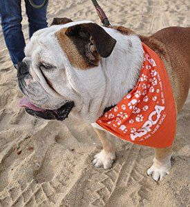 Loews Surf Dog Competition Helps Fight Animal Cruelty!