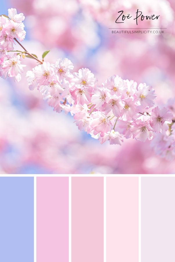 Cherry Blossom Colour Palette In Pastel Pinks Print By Zoe Power Color Palette Pink Pastel Colour Palette Color Schemes Colour Palettes